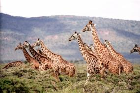 5 Days 4 Nights Safari - The Greatness Of Maasai Mara