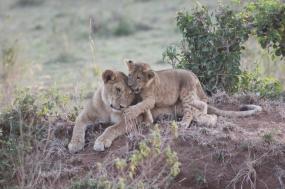 7 Days Masai Mara- Lake Naivasha - Amboseli