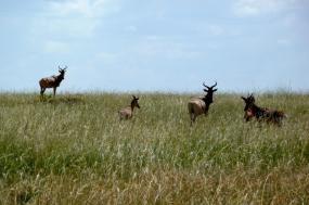 8 Days Kenya Safari Mt. Kenya / Samburu / Ol Pejeta / Lake Nakuru / Masai Mara