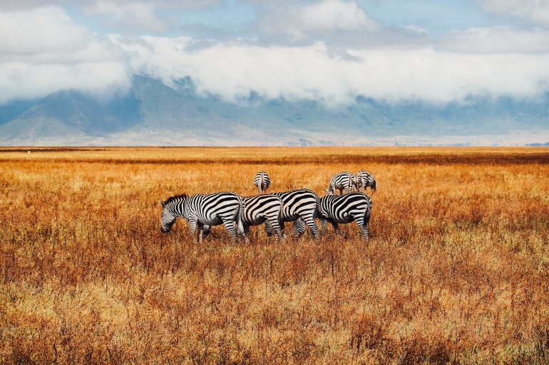 Group of wild animal-Ngorongoro-Tanzania_P