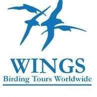 Wings Birding Tours