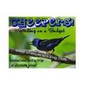 Cheepers Birding logo