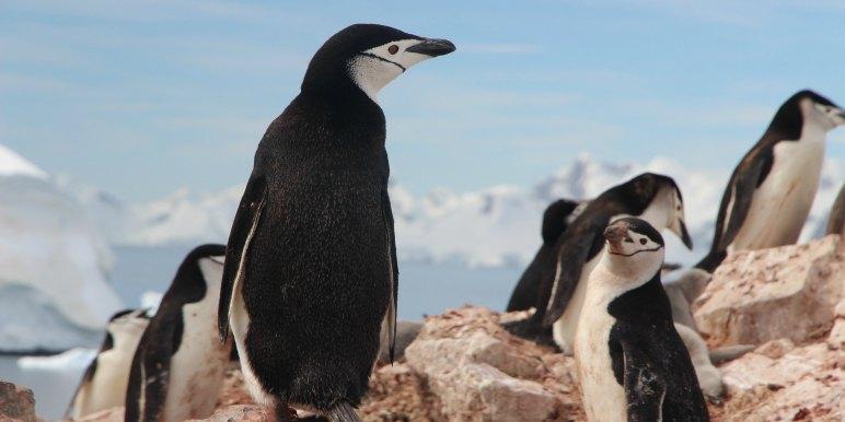 Penguins in arctic
