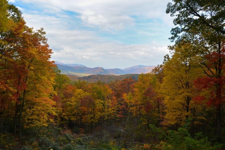 Beautiful Tress around National park-USA-2406632-P