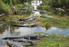 Everglades  tour