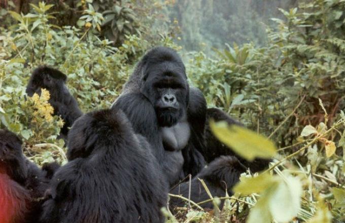 Untouched Africa: Gorillas of the Congo Basin  tour