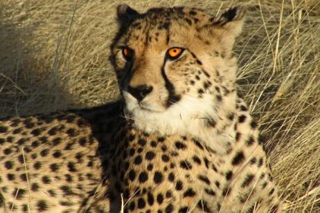 Namibia Culture and Wildlife Adventure tour