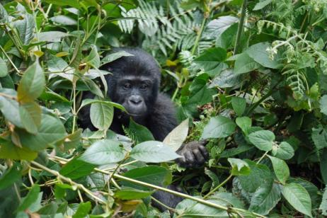 3 Days Bwindi Gorilla Trek and Igongo Cultural Centre