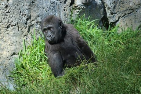 Mountain Gorilla Expedition