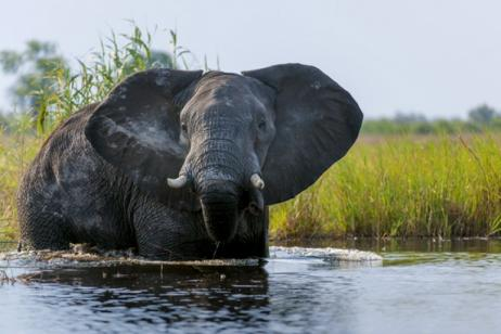 11 Day Kalahari, Okavango, Linyati & Chobe Luxury Safari