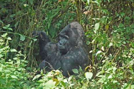 7 Days Chimpanzee, Gorilla Tracking And Wild Game Safari