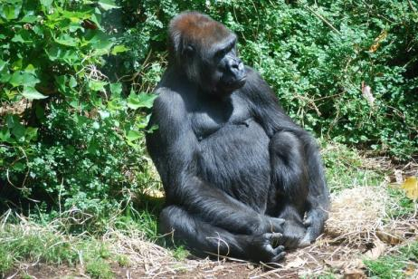 5 Days Murchison Falls and Bwindi Gorillas