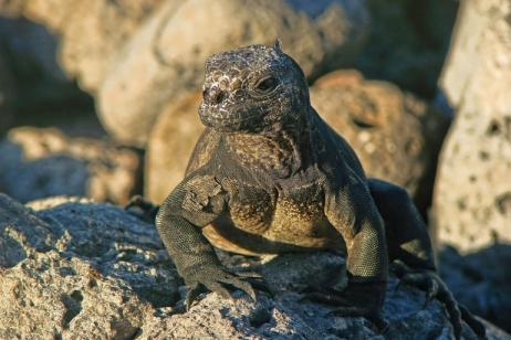 Ecuador & Galapagos Islands tour