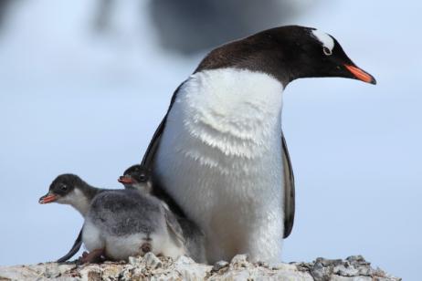 Polar Circle - Antarctic Peninsula tour