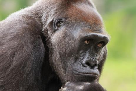 Remarkable Rwanda - Gorilla Trek tour