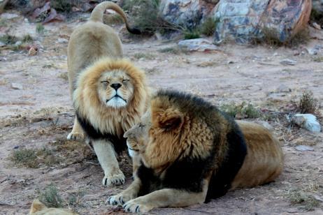 Cape Town & Safari with Mauritius tour