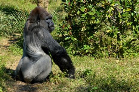 6 Days Gorillas, Chimps and Wildlife Tour