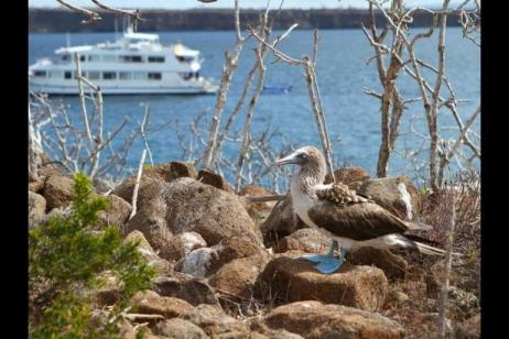 Galapagos Uncovered - Monserrat