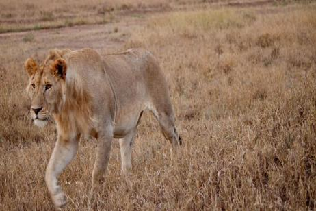 Serengeti to Victoria Falls Adventure