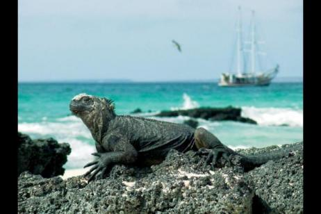 Volcanoes and Galapagos