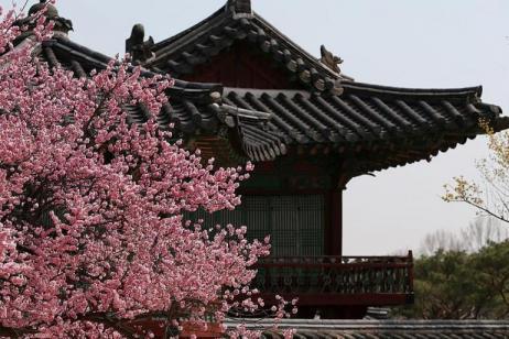 Highlights Of Korea tour
