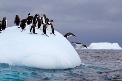 Antarctica, Falklands & South Georgia