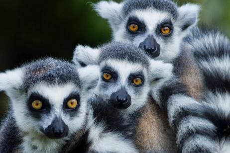 Lemurs, National Parks, and Beaches