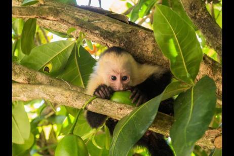 Natural Highlights of Costa Rica