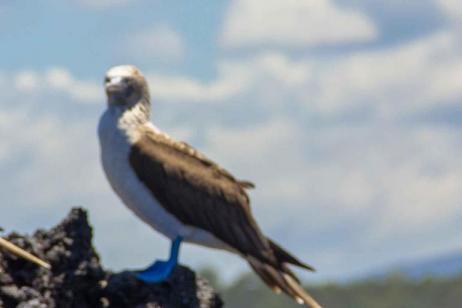 Galapagos Explorer - Southern Islands  (Grand Queen Beatriz)