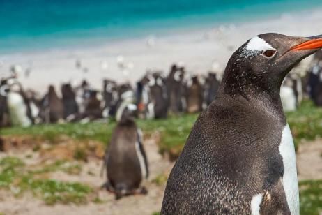 Exclusive Antarctica, South Georgia & the Falklands