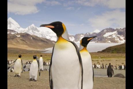 Falklands, South Georgia and Antarctica - M/V Polar Pioneer
