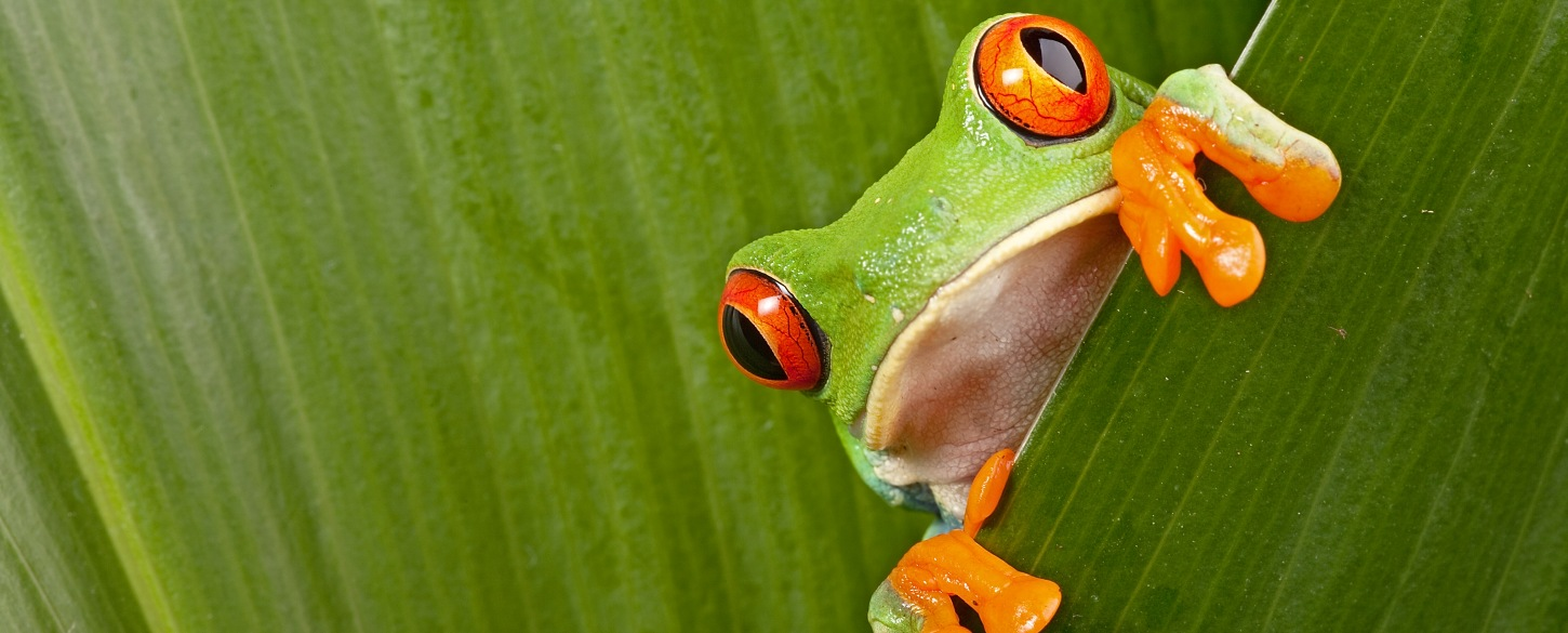 Tree frog nature amazon guided tours