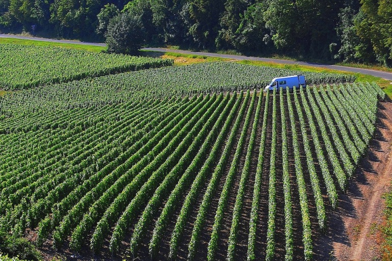 Vineyeards-France-1062602_P