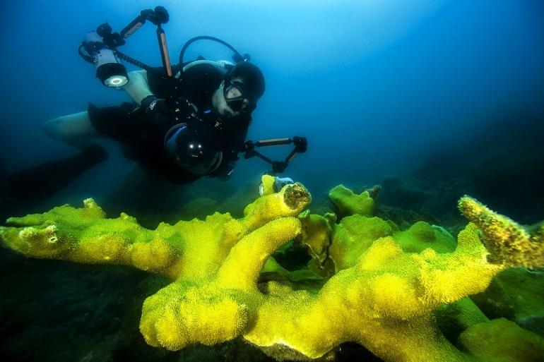 7 Day Cod Hole, Coral Sea & Ribbon Reefs Liveaboard tour