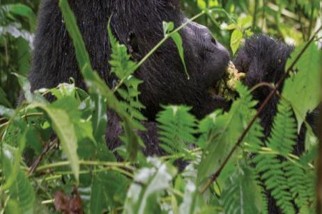 Rwanda & Uganda Gorilla Discovery tour