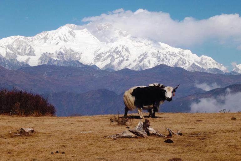 Darjeeling Gangtok Darjeeling, Sikkim & the Singalila Ridge Trip