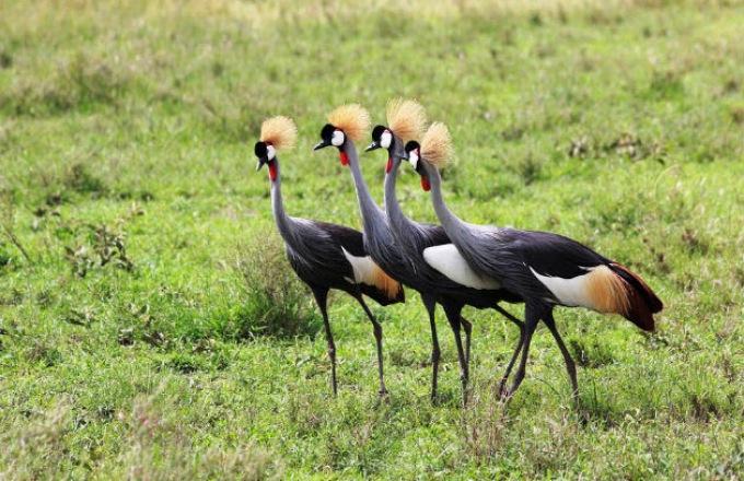 Southern Africa Birding Safari: South Africa, Zambia, Zimbabwe & Botswana tour
