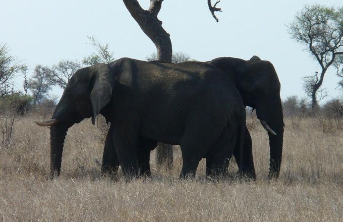 Classic Kruger Family Safari tour