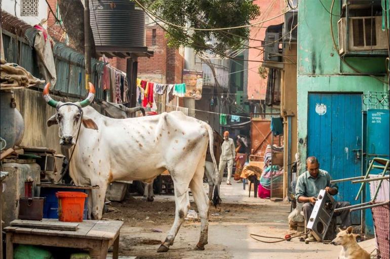 Agra Chitwan National Park Delhi to Kathmandu Trip