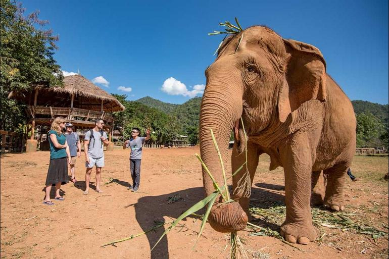 Cultural Relaxing Retreat Chiang Mai & Elephants  package