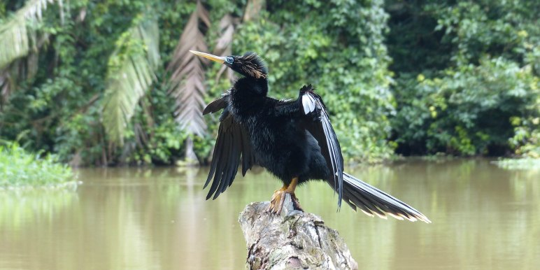 Darter bird striking a pose in the tropics