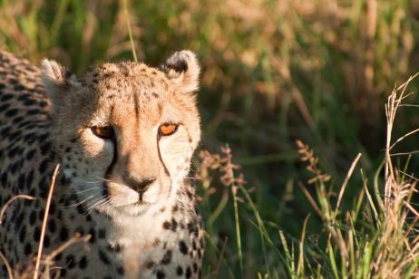 3 Day Masai Mara Flying Package tour