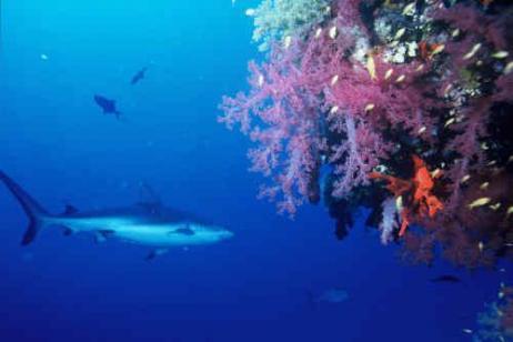 Coastal Adventure: Shark Cage Diving & Safari tour