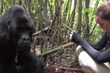 7 days Nyiragongo and Mt. Gorilla trekking Rwanda tour