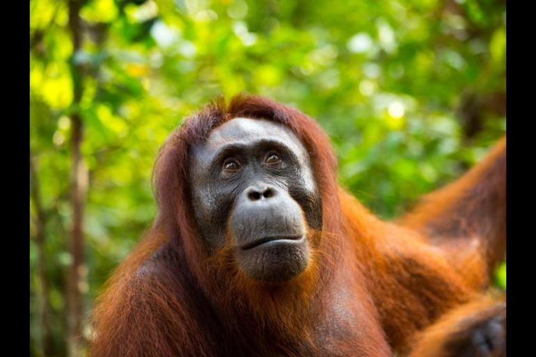 Education / Learning Wildlife viewing Sumatra and Eclipse package