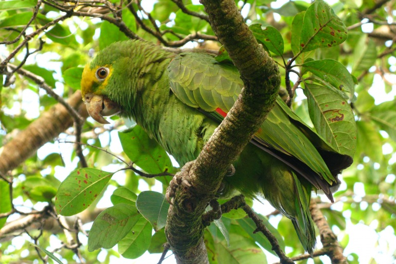 Nature & Wildlife Caving Belize – Caribbean Manatee Adventure package