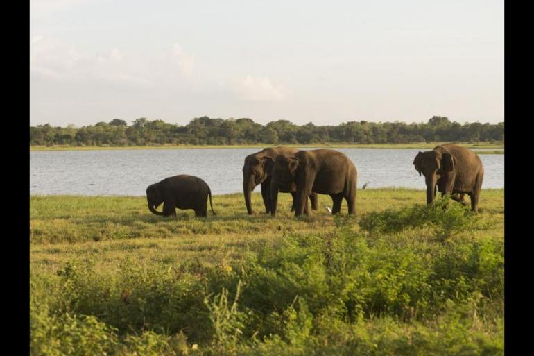 Education / Learning Wildlife viewing Tailormade Sri Lanka Wildlife Discovery package