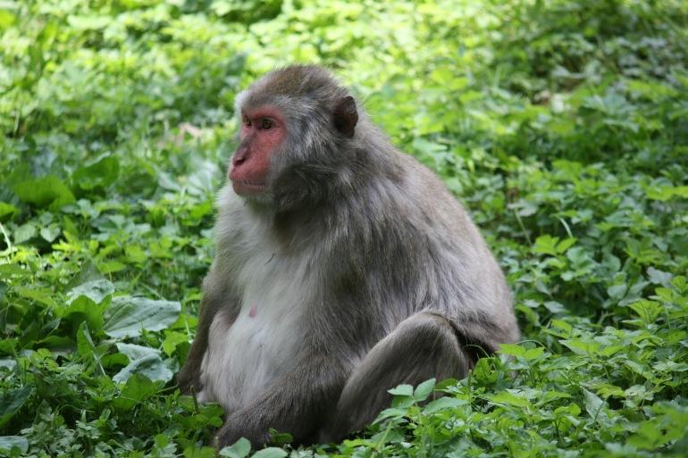 Chimpanzee View at Nyungwe National park, Rwanda