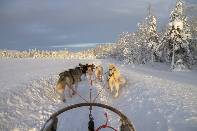 Wintry dog sled in lapland, Finland