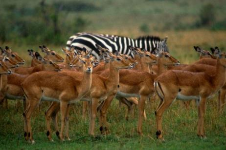 Classic Kenya: A Tented Camp Safari (QK) tour